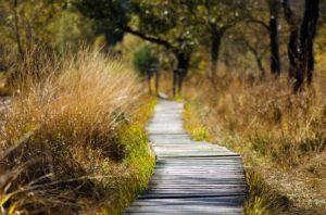 Transition Path